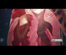 COVID: уничтожая сердце
